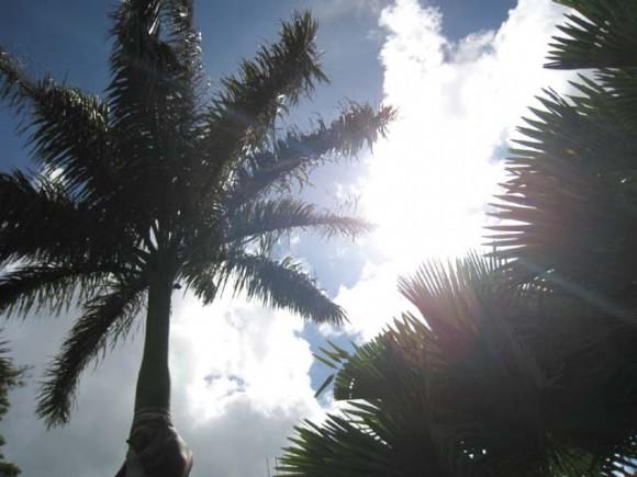 sunray1