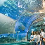 画像はhttp://www.cometeguam.com/under-water-world/より